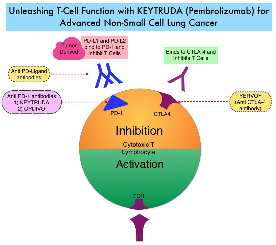 Unleashing-T cell-Function-with-KEYTRUDA-in-Advanced-Lung-Cancer