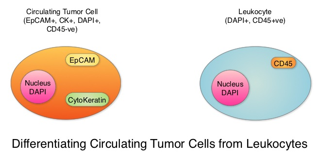 Differentiating-Circulating-Tumor-Cells-from-Leukocytes