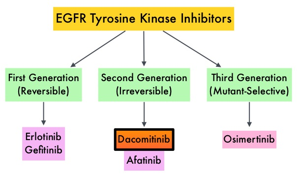 EGFR-Tyrosine-Kinase-Inhibitors