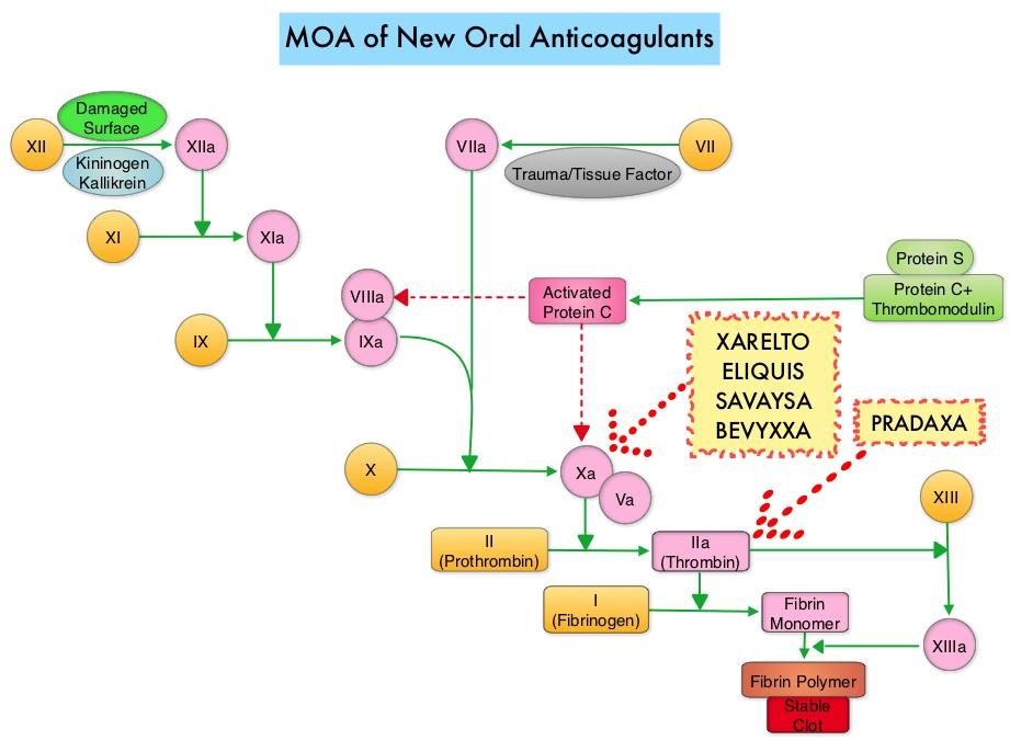 MOA-of-New-Oral-Anticoagulants