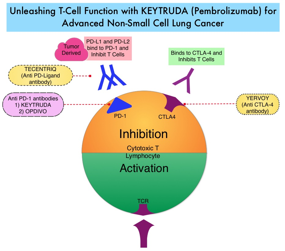 Unleashing-T-Cell-Function-with-Keytruda (Pembrolizumab)-for-Advanced-Non-Small-Cell-Lung-Cancer