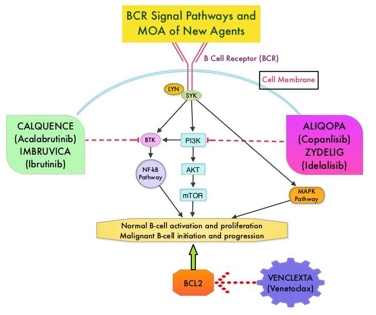 FDA-Approves-BCL2-Inhibitor-VENCLEXTA-for-Chronic-Lymphocytic-Leukemia