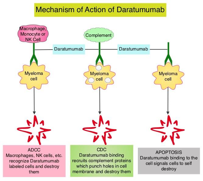 Mechanism-of-Action-of-Daratumumab
