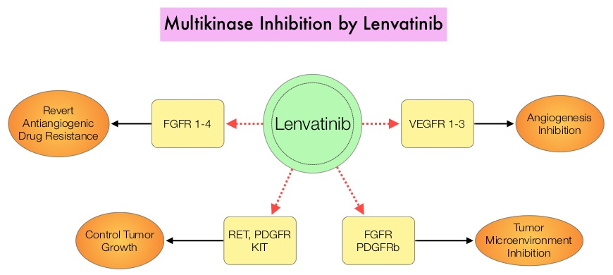 Multikinase-Inhibition-by-Lenvatinib