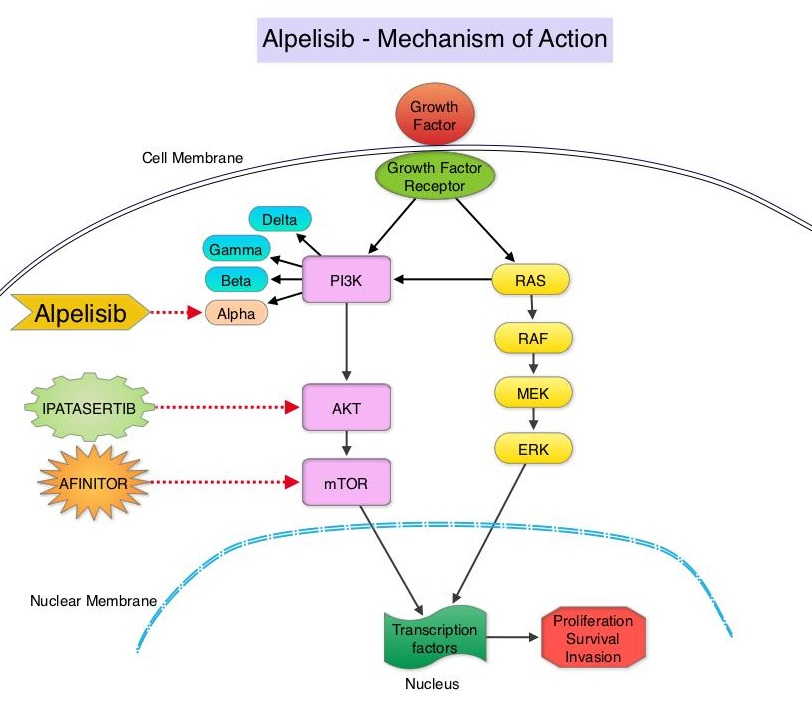 Alpelisib - Mechanism-of-Action