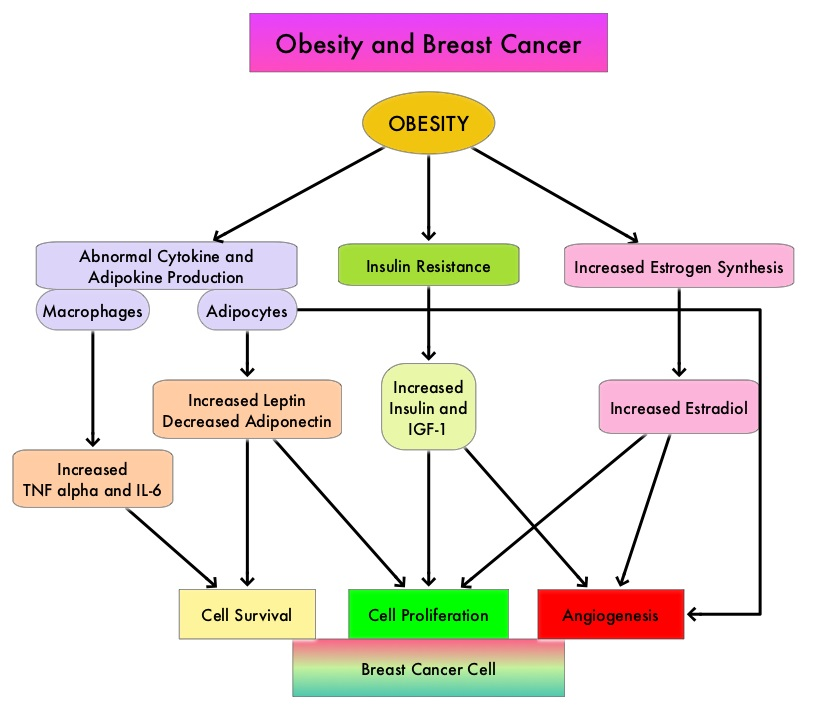 Obesity-and-Breast-Cancer