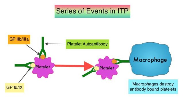 Series-of-Events-in-ITP