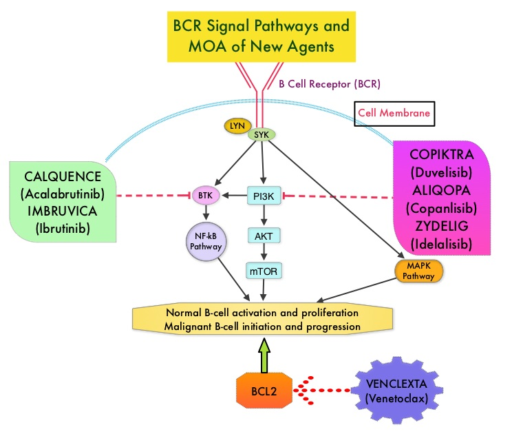 BCR-Signal-Pathways-and-MOA-of-New-Agents