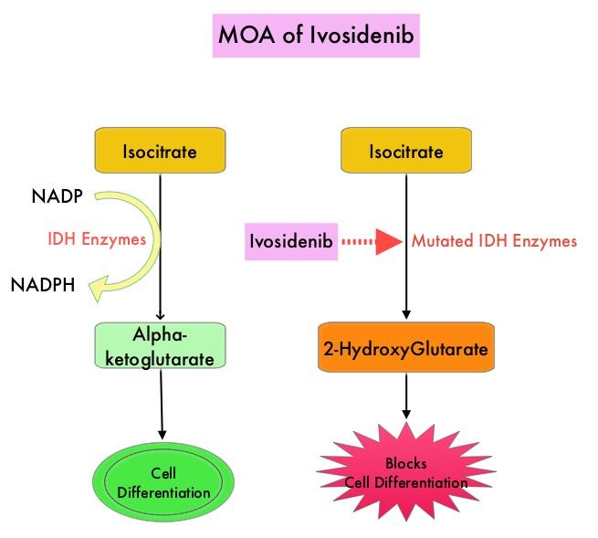 MOA-of-Ivosidenib