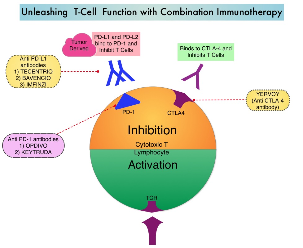 Unleashing-T-Cell-Function-with-Combination-Immunotherapy