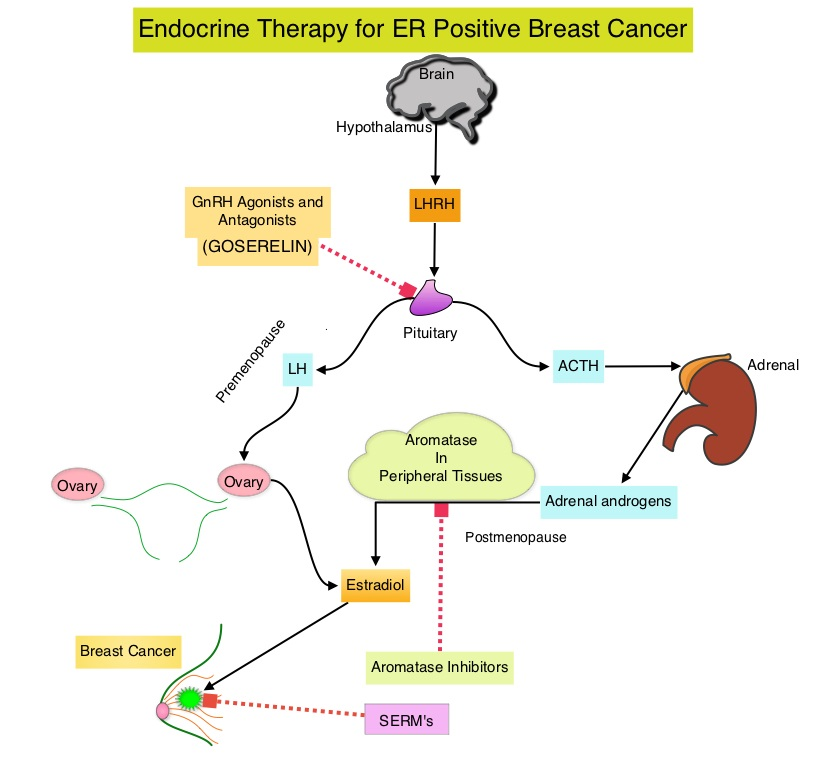 hormone therapy Er breast positive cancer