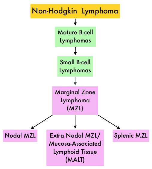 small mature b cell lymphoma