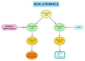 MOA-of-RUBRACA