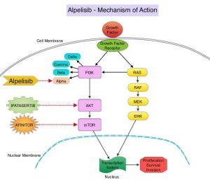 Alpelisib-Mechanism-of-Action