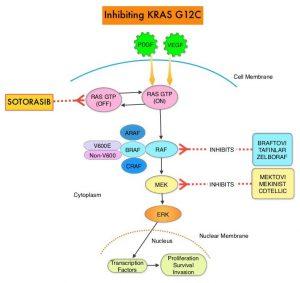 Inhibiting-KRAS-G12C