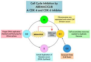 Cell-Cycle-Inhibition-by-ABEMACICLIB-A-CDK4-and-CDK6-Inhibitor