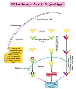 MOA-of-Androgen-Receptor-Targeted-Agents