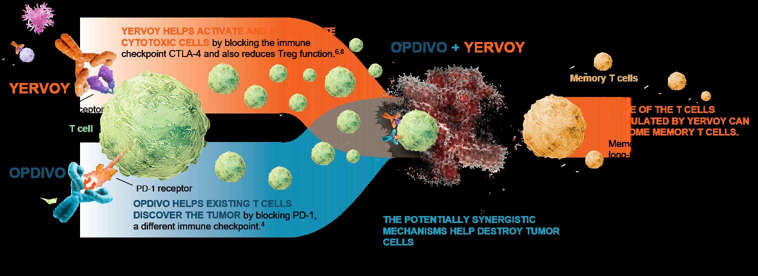 OPDIVO+YERVOY-MOA